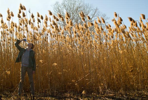 Bibi на фоне зарослей тростника