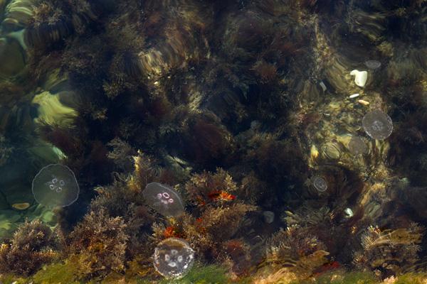 зимние медузы