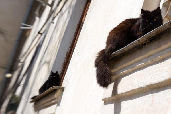 раздвоившийся кот
