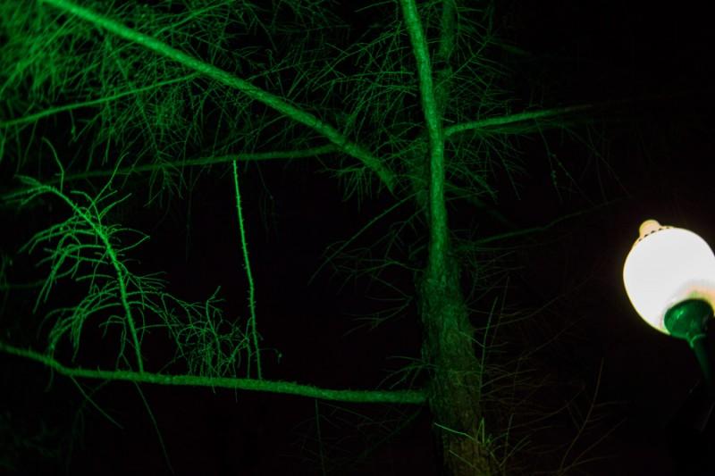зелёный зимой