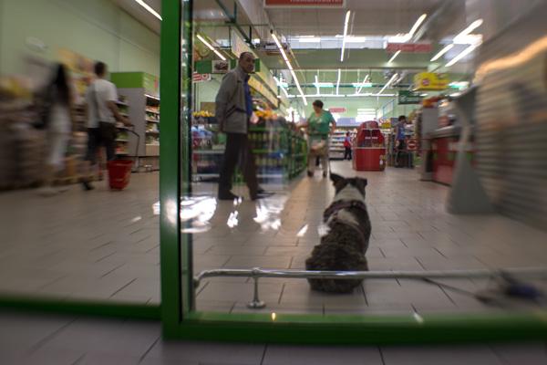 собака в супермаркете