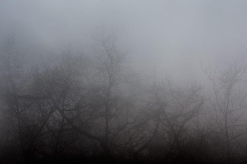 снимок лёгких города